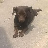 Adopt A Pet :: Coco - Laconia, IN