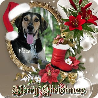 Coonhound (Unknown Type) Mix Dog for adoption in Crowley, Louisiana - Blaze