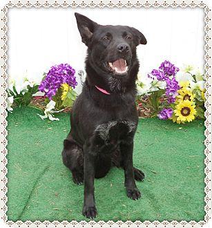 Shepherd (Unknown Type) Mix Dog for adoption in Marietta, Georgia - LUNA (R)