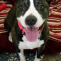 Adopt A Pet :: Missy - Franklin, NH