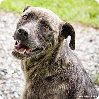 Adopt A Pet :: Foras - Lincolnton, NC