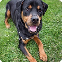 Adopt A Pet :: Dayo - Rigaud, QC