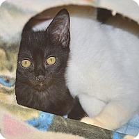 Adopt A Pet :: Dahlia - San Leon, TX