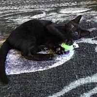 Adopt A Pet :: Benny - Melbourne, FL