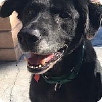 Adopt A Pet :: Zen - Torrance, CA