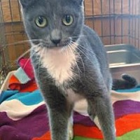 Adopt A Pet :: CoraBean - Ashtabula, OH