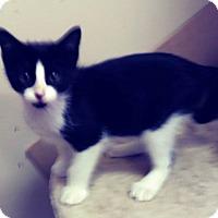 Adopt A Pet :: Athens - Trevose, PA
