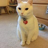 Adopt A Pet :: Kimba - Trexlertown, PA