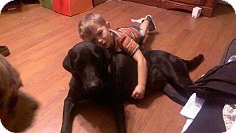 Labrador Retriever Mix Dog for adoption in Humble, Texas - Nikki