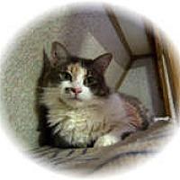 Adopt A Pet :: Re - Shelton, WA