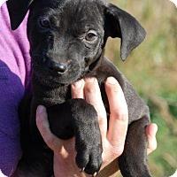 Adopt A Pet :: Zane - Adoption Pending - Milford, CT