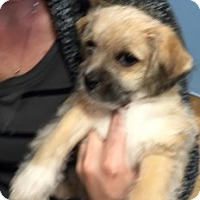 Adopt A Pet :: Rascal - Strasburg, CO