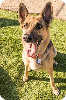 German Shepherd Dog Dog for adoption in Phoenix, Arizona - Frankie
