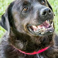 Adopt A Pet :: Baxter - Miami, FL