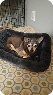 Chihuahua Mix Dog for adoption in Mount Pleasant, South Carolina - Dee Dee