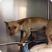 Adopt A Pet :: Skeeter - Westminster, CA