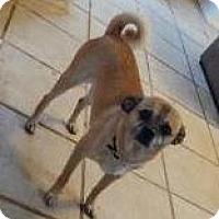 Adopt A Pet :: Woody - Las Cruces, NM