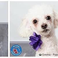 Adopt A Pet :: Emma - Pompano Beach, FL