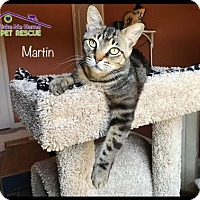 Adopt A Pet :: Martin - Richardson, TX