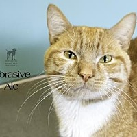 Adopt A Pet :: Abrasive Ale - South Bend, IN