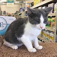 Adopt A Pet :: Raj - Buffalo, NY