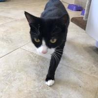 Adopt A Pet :: Candi - Barco, NC