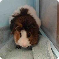 Adopt A Pet :: *Urgent* Gump - Fullerton, CA