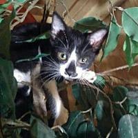 Adopt A Pet :: Miami - Spring, TX