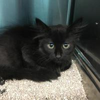 Adopt A Pet :: Stanley - Grand Island, NE
