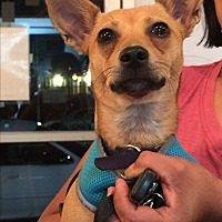 Adopt A Pet :: Tobie  *courtesy post - Los Angeles, CA