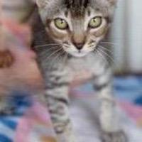 Adopt A Pet :: Libero - Lihue, HI