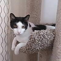 Adopt A Pet :: Calvin - Tampa, FL