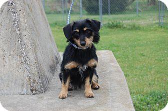 Dachshund Mix Dog for adoption in North Judson, Indiana - Heidi