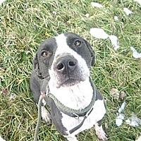 Adopt A Pet :: #556-13 @ Animal Shelter - Zanesville, OH