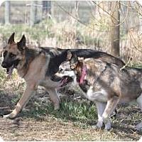 Adopt A Pet :: Rico - Hamilton, MT