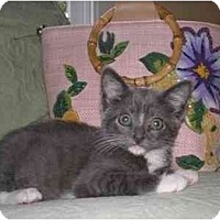 Adopt A Pet :: Lionel & Matty (A Pair!) - Portland, OR