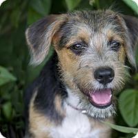 Adopt A Pet :: Cairo - Calgary, AB