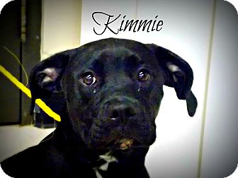 Boxer Mix Dog for adoption in Defiance, Ohio - Kimmie