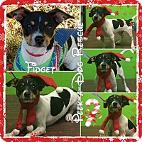 Adopt A Pet :: Fidget - South Gate, CA