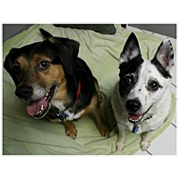 Adopt A Pet :: Curly & Moe - Forked River, NJ