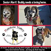 Adopt A Pet :: Buddy - Buckeye, AZ