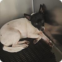 Adopt A Pet :: Oreo - Palm Bay, FL