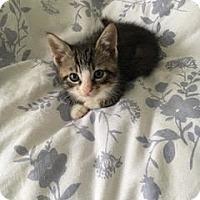 Adopt A Pet :: Kabuchi - Wilmington, NC