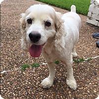 Adopt A Pet :: Zippy - Sugarland, TX