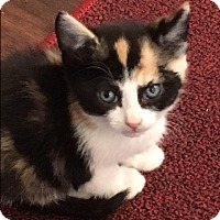 Adopt A Pet :: Clementine - Prescott, AZ
