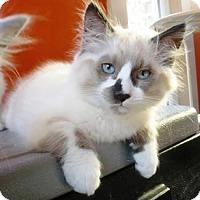 Adopt A Pet :: Daisy - Castro Valley, CA