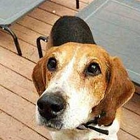 Adopt A Pet :: George Clooney ~Sponsored Fee~ - Youngsville, NC