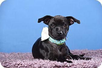 Mixed Breed (Small) Mix Dog for adoption in Houston, Texas - Katy