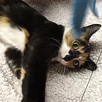 Adopt A Pet :: Spirit - Butner, NC