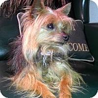 Adopt A Pet :: Becca - Dartmouth, MA